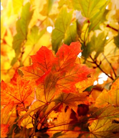 bildschirmfoto-2016-10-31-um-13-59-33