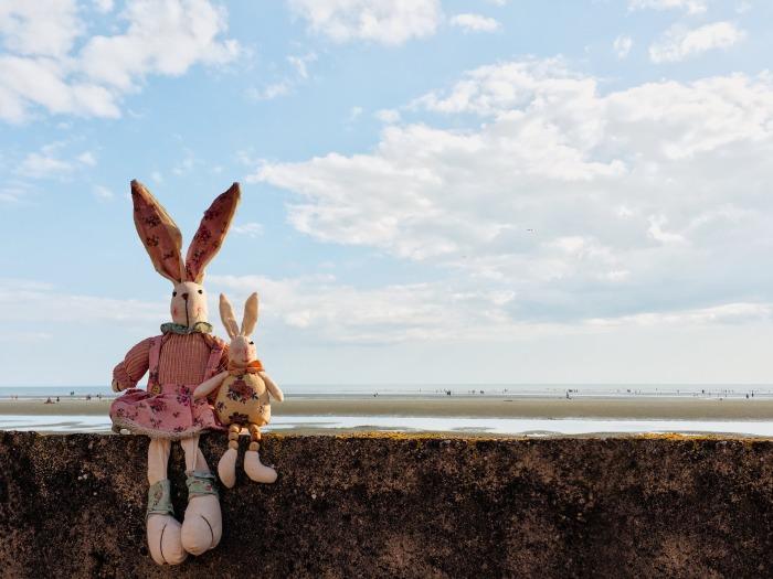 rabbits-1837215_1920